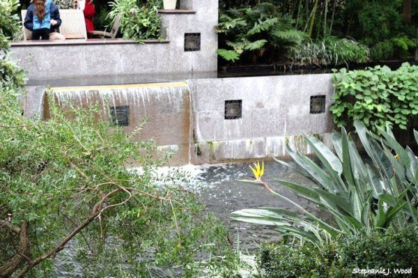 Bird Near the Falls
