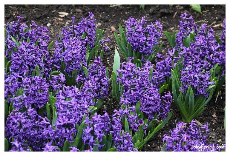 Smells of Spring