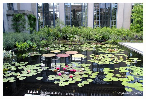 Lilly Pad Garden