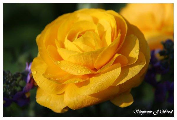 Flower tears