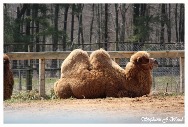 Two Humps