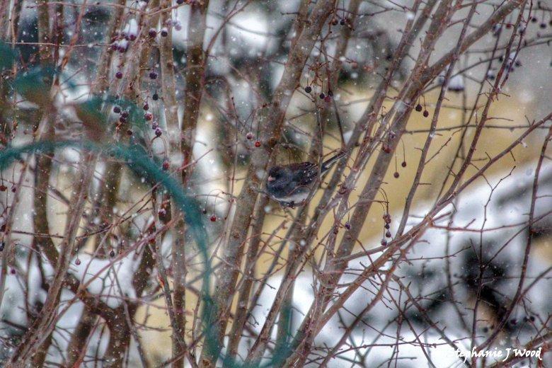 Around the Bird Feeder