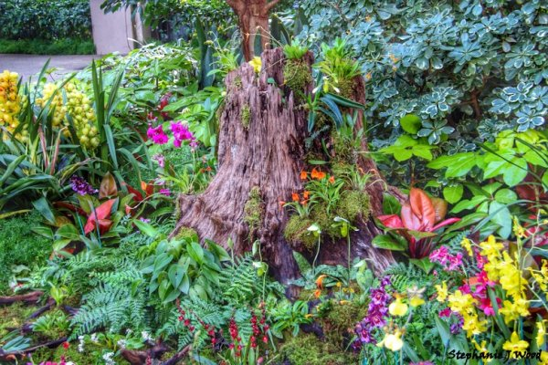 Tree Stump and Orchids