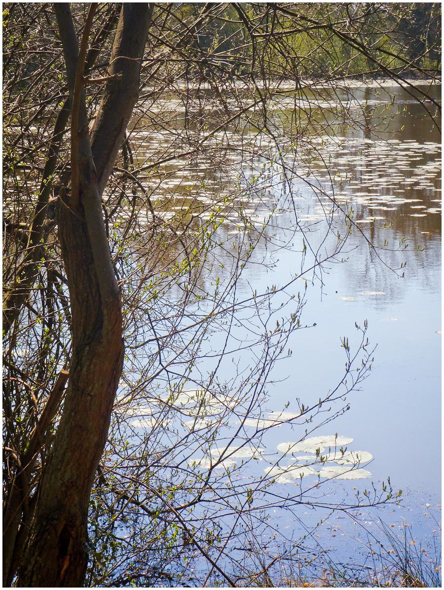 Battle Pond