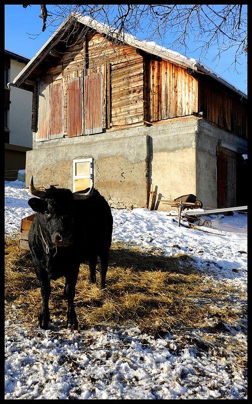 Unterbäch Valais Suisse