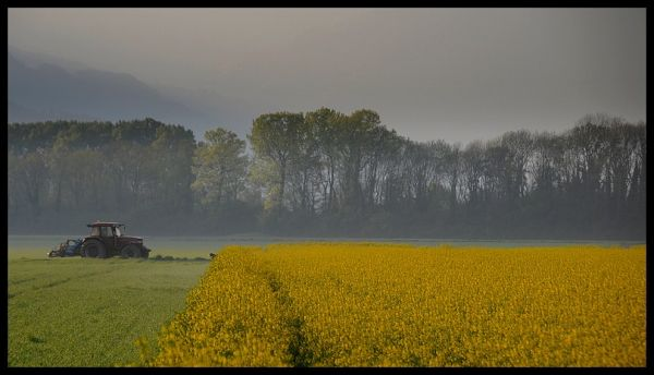 Roche Vaud