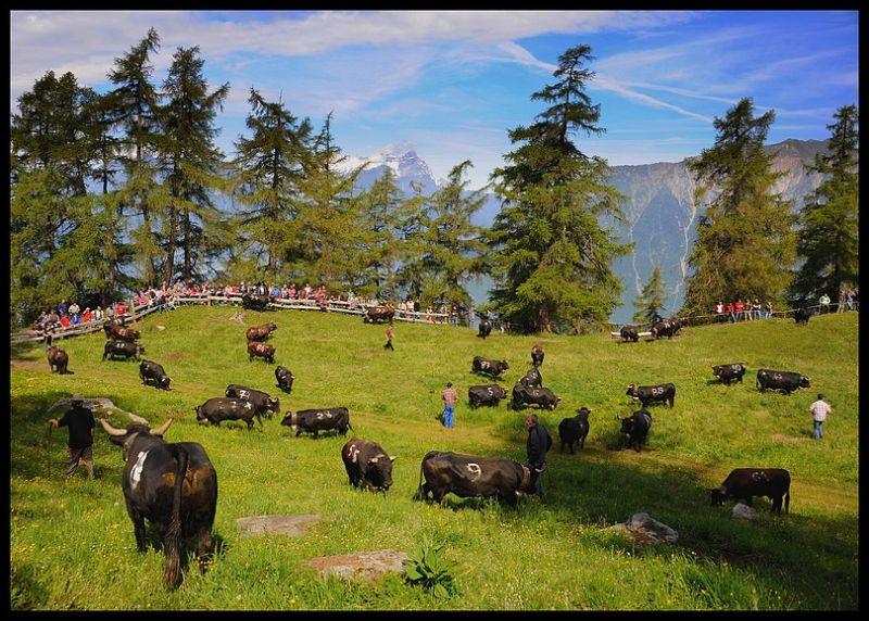 Tronc Alpage Valais Suisse