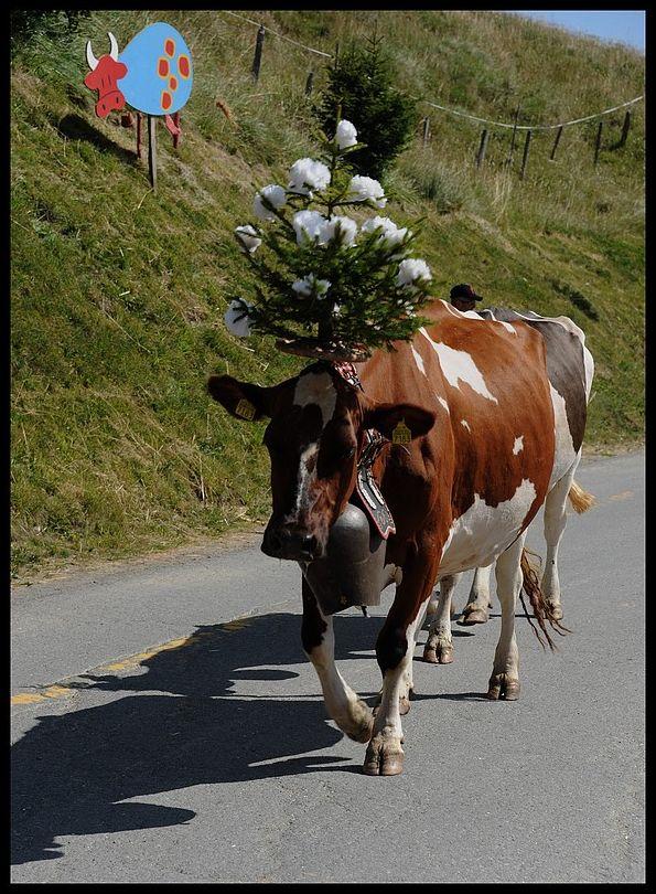 Les Crosets Valais Suisse