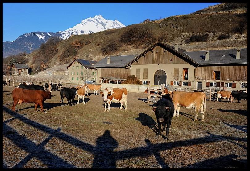 Châteauneuf Valais Suisse