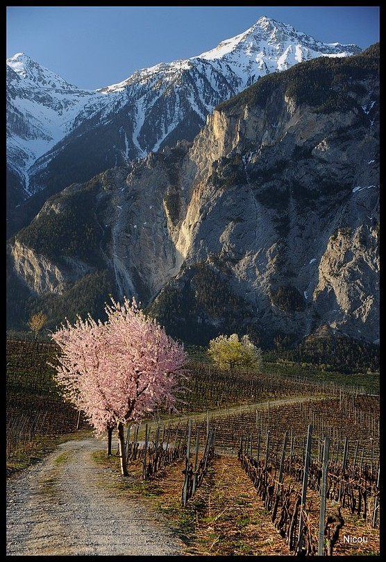 Varen Valsis Suisse