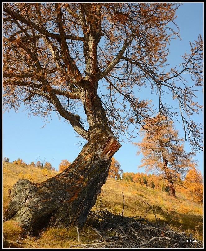Thyon Valais Suisse