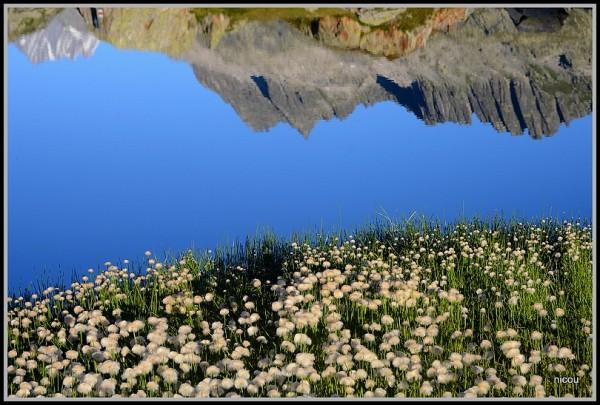 Grimsle valais Suisse