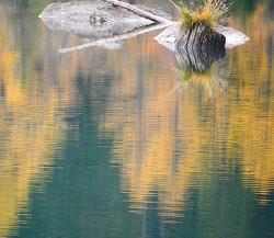 Natures morte ssur lit de mélèzes dorés