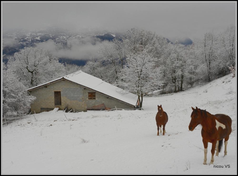 Saviése Valais Suisse
