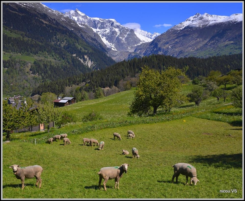 Ernen Valais suisse