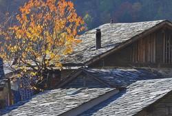 Suisse Valais Plan Cerisier