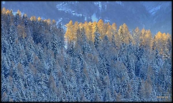 Suisse Valais Mase
