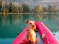 Ma chienne en pêche