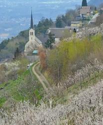 Suisse Valais Baar