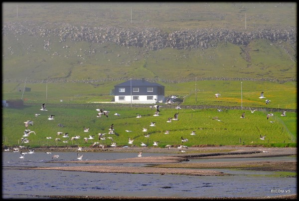 Faroe Island