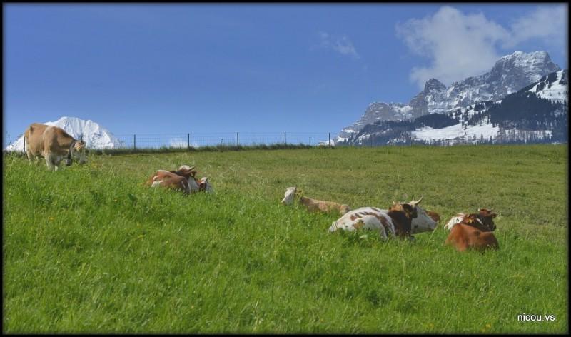 Suisse Vaud Bex