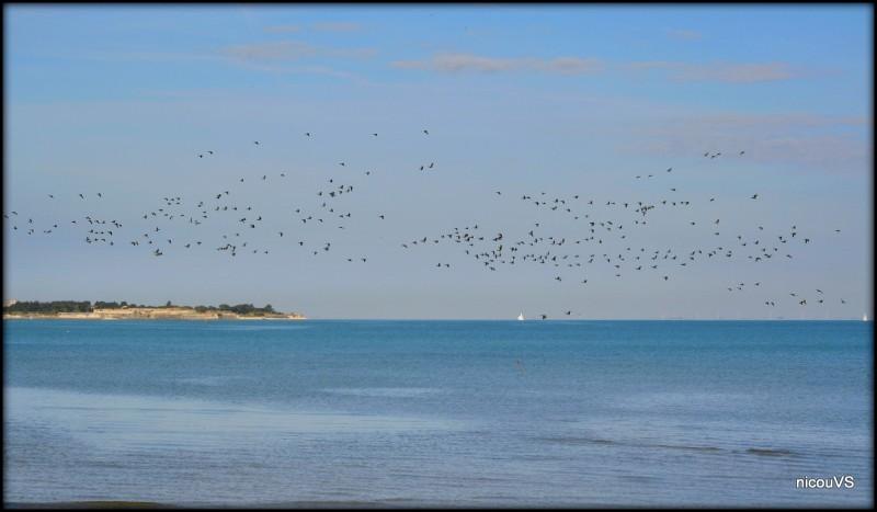 France Île de Re