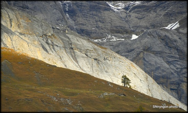 Suisse Valais Derborence