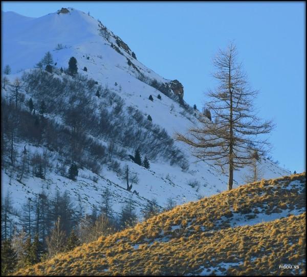 Suisse Valais Val Ferret