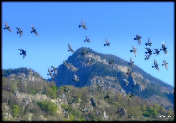 Suisse Valais Naters