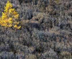 tache jaune dna les buissons