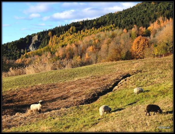 Mayen de Conthey Valais suisse