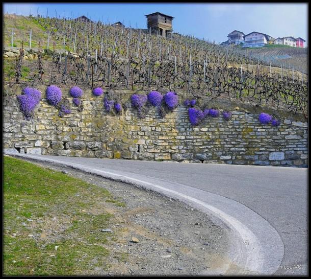 Vuisse Valais Suisse