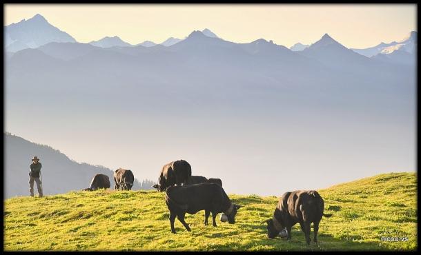 Pointet Valais Suisse