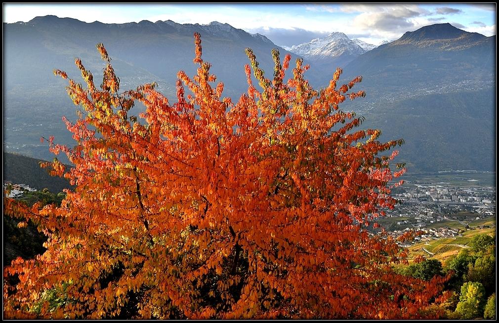Daillon Valais Suisse