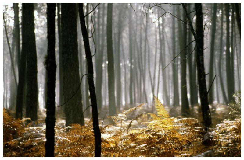 Les Landes à l'automne