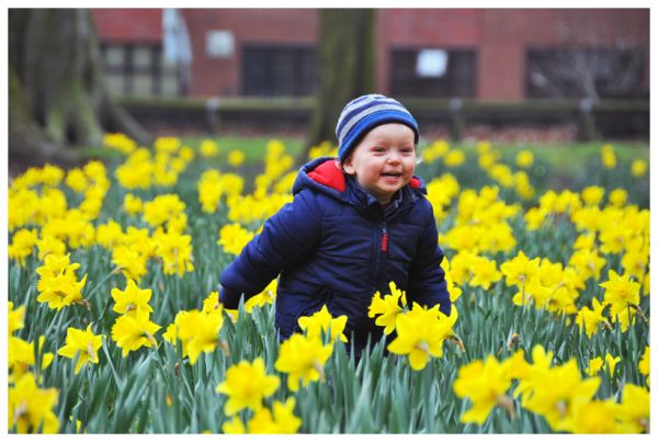Hiding in the daffodils