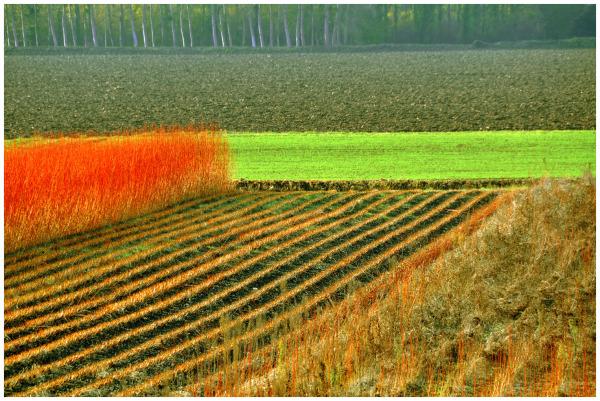 Le champ d'osier