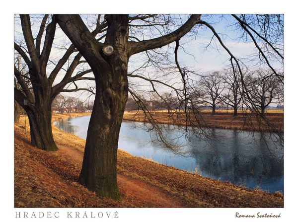 Trees along Labe (Elbe)