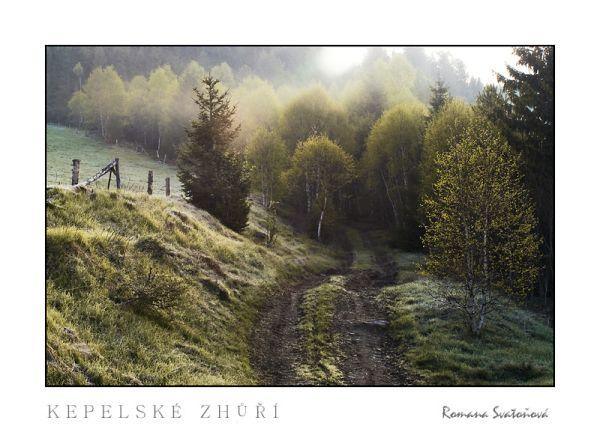 misty morning at Zhúří National Park Šumava