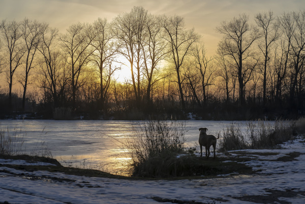 A winter dog walk around a sand pond in the sunset
