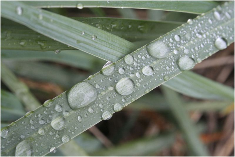 beaded water on a leaf