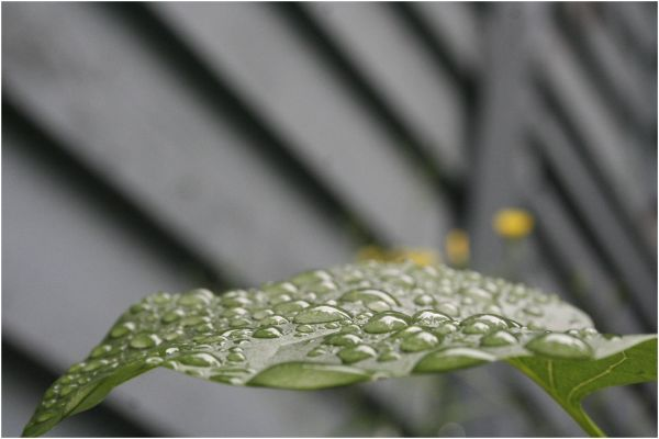 water droplets on a green leaf