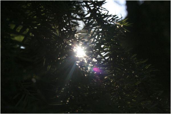 sunlight reaching
