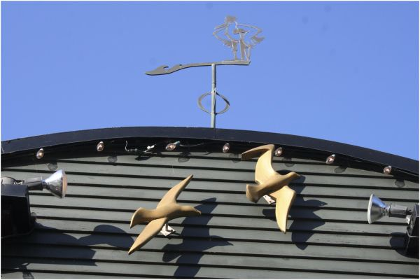 birds, wanting the sky