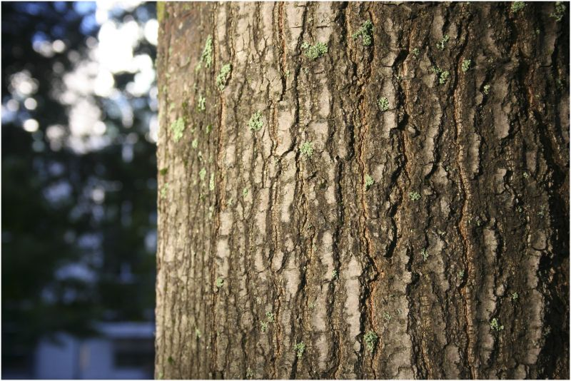 bark and texture