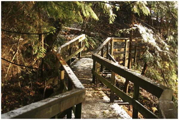 wooden trail