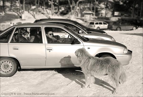 Car park watch dog