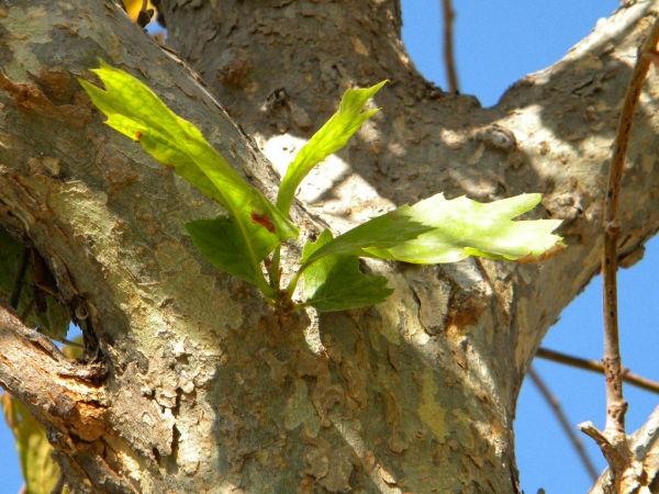 Tree & New Life