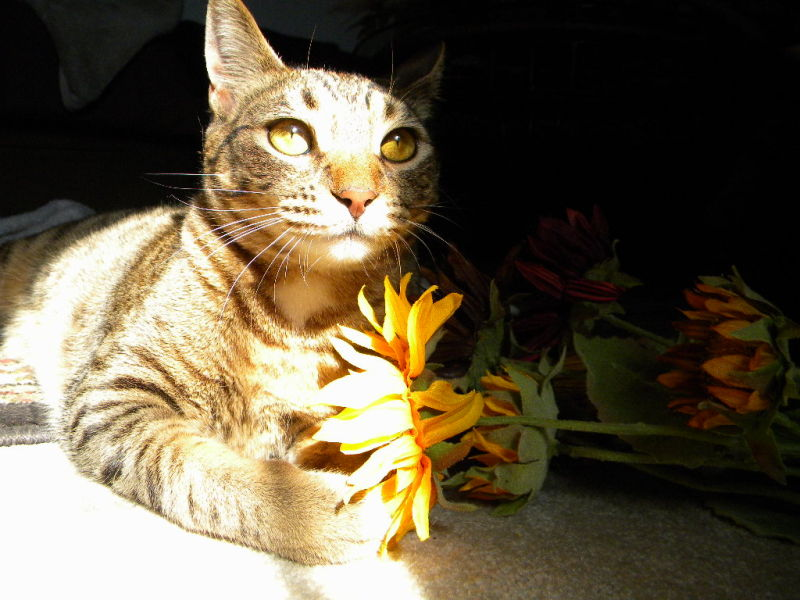 Kitty Prayer