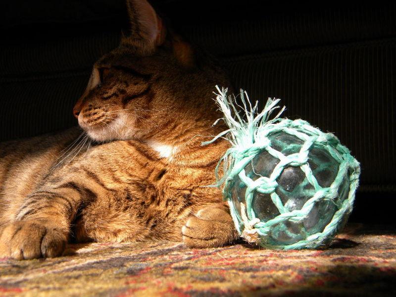 My Best Side...Meow!